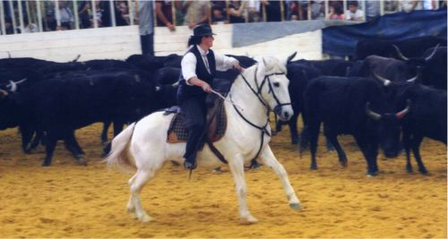 salon du cheval montpellier